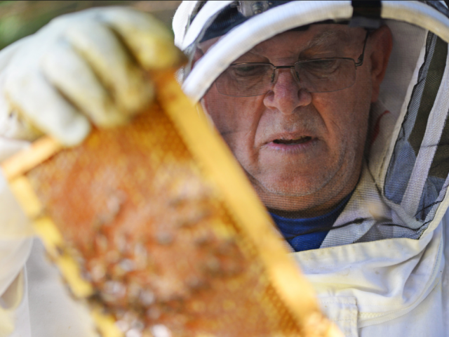 Fisher's Apiary: From Hive to Home